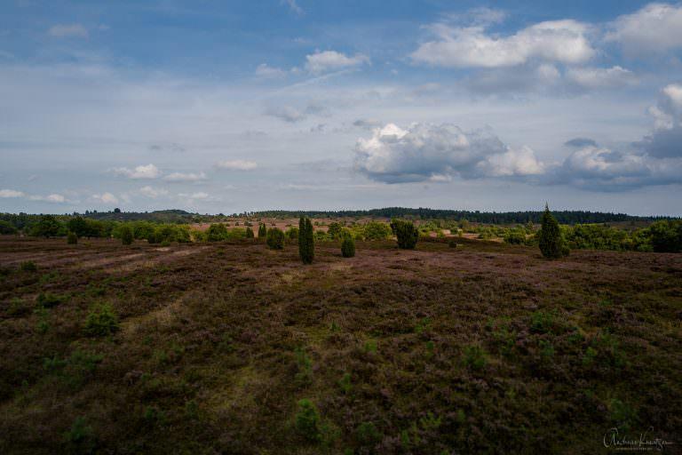 Blick von der Aussichtsplattform Fürstengrab auf die Heide