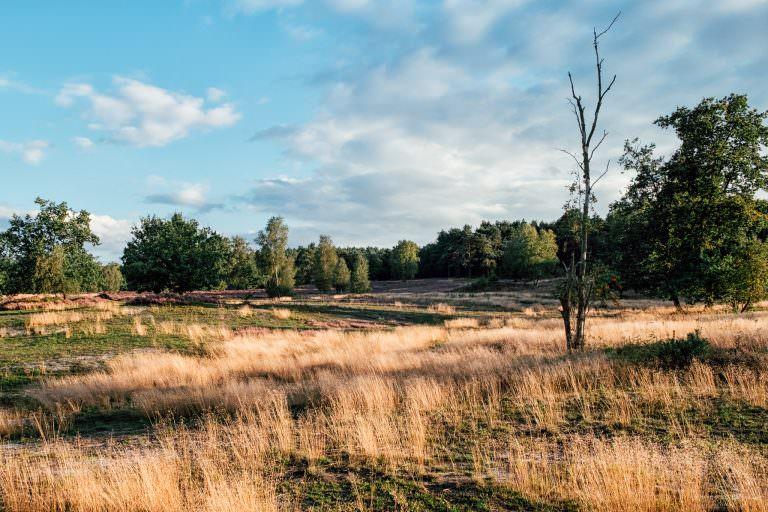 Fischbeker Heide VII