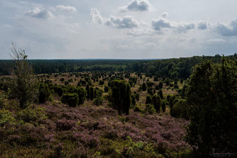 Steingrund in der Lüneburger Heide